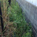 草刈り・溝掃除・不用品処分の現地調査に行って参りました。-加古川市-
