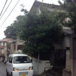 木の伐採に行ってまいりました。-神戸市北区-
