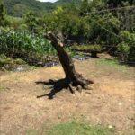 梅の木の伐採に行ってきました! -神戸市須磨区-