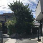 松の木剪定作業に行ってまいりました! -神戸市長田区山下町-