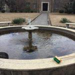 噴水のメダカ保護・水入れ替え・苔掃除 -西宮市岡田山-