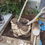 木2本の移植・落ち葉処分 -神戸市中央区北長狭通-