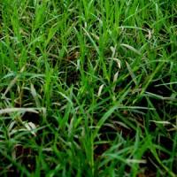 草刈り・草引き